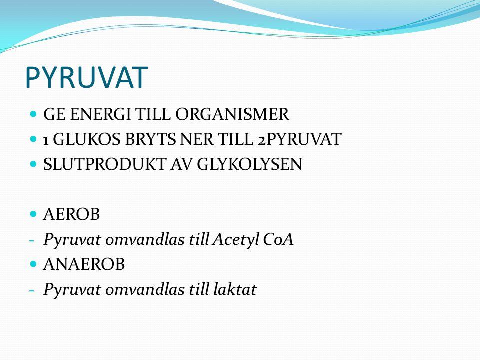 PYRUVAT GE ENERGI TILL ORGANISMER 1 GLUKOS BRYTS NER TILL 2PYRUVAT