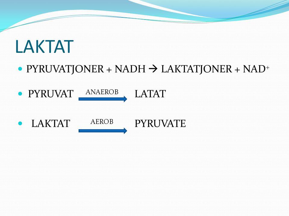 LAKTAT PYRUVATJONER + NADH  LAKTATJONER + NAD+ PYRUVAT ANAEROB LATAT