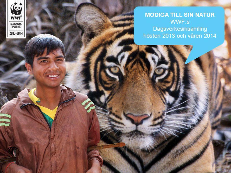 MODIGA TILL SIN NATUR WWF:s Dagsverkesinsamling hösten 2013 och våren 2014