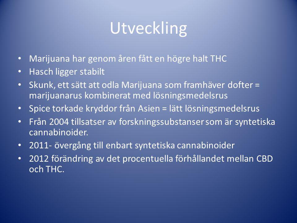 Utveckling Marijuana har genom åren fått en högre halt THC