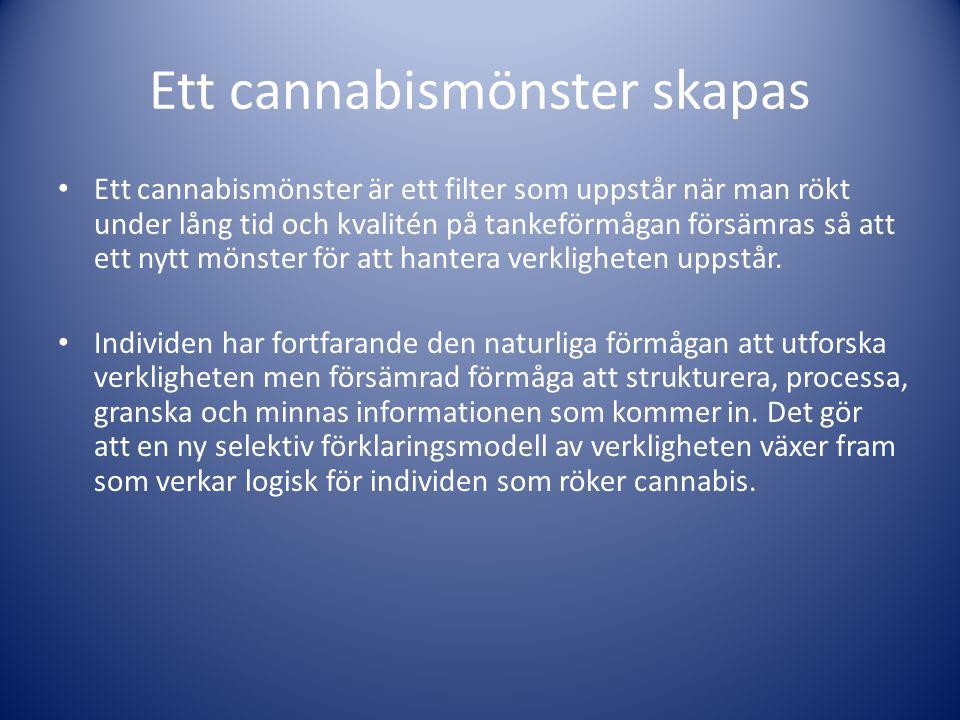 Ett cannabismönster skapas