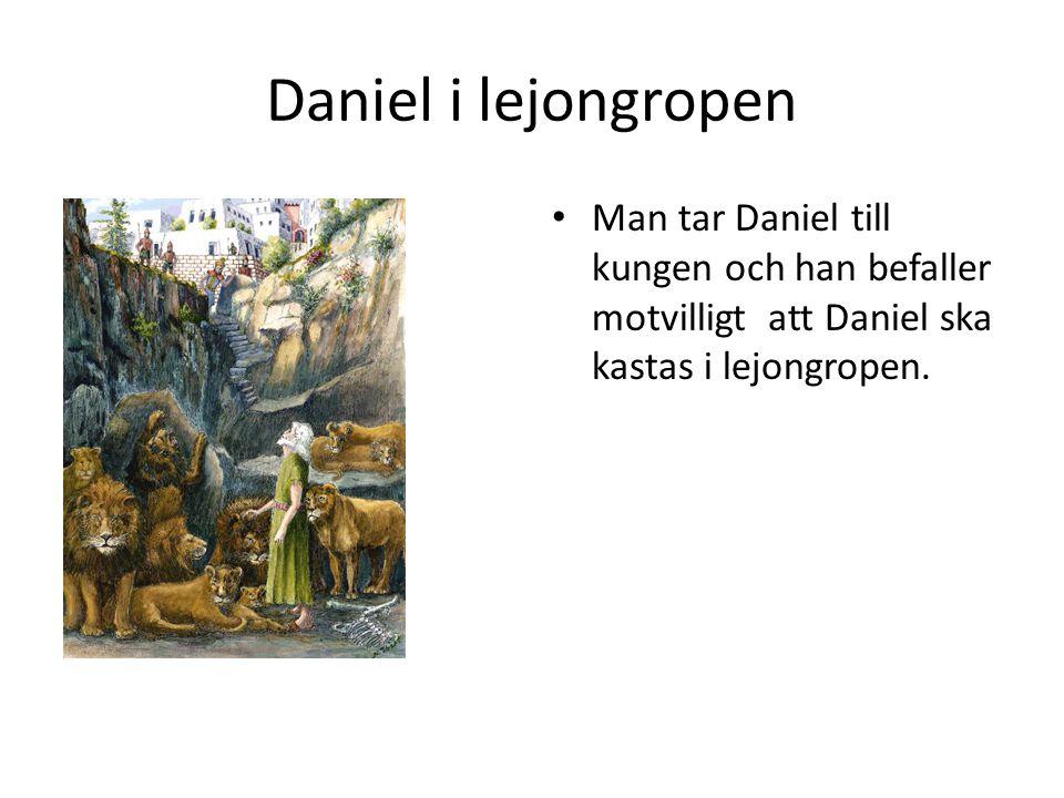 Daniel i lejongropen Man tar Daniel till kungen och han befaller motvilligt att Daniel ska kastas i lejongropen.
