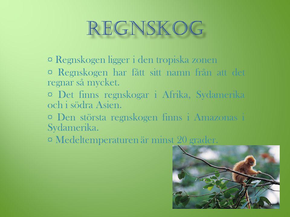 REGNSKOG ¤ Regnskogen ligger i den tropiska zonen