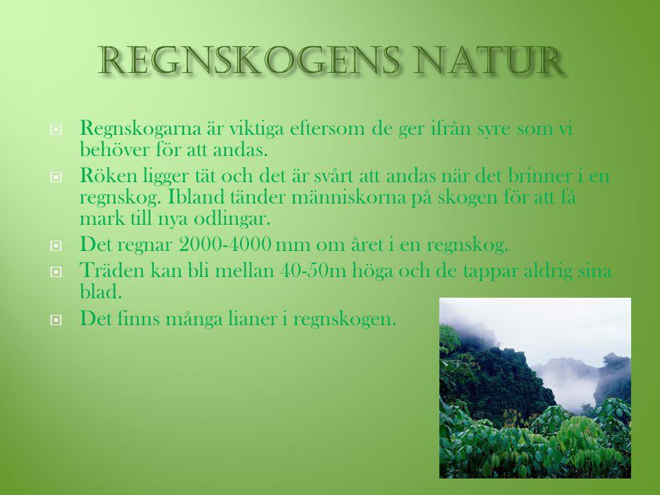 Regnskogens natur Regnskogarna är viktiga eftersom de ger ifrån syre som vi behöver för att andas.