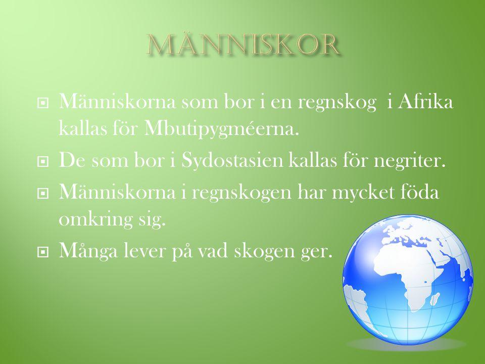 Människor Människorna som bor i en regnskog i Afrika kallas för Mbutipygméerna. De som bor i Sydostasien kallas för negriter.