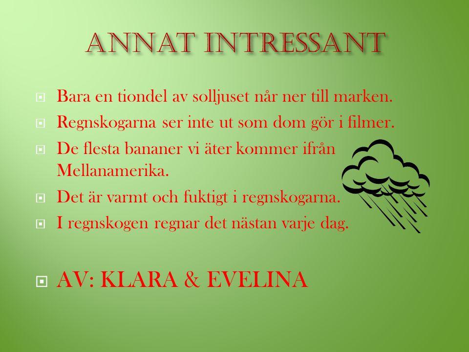 Annat intressant AV: KLARA & EVELINA