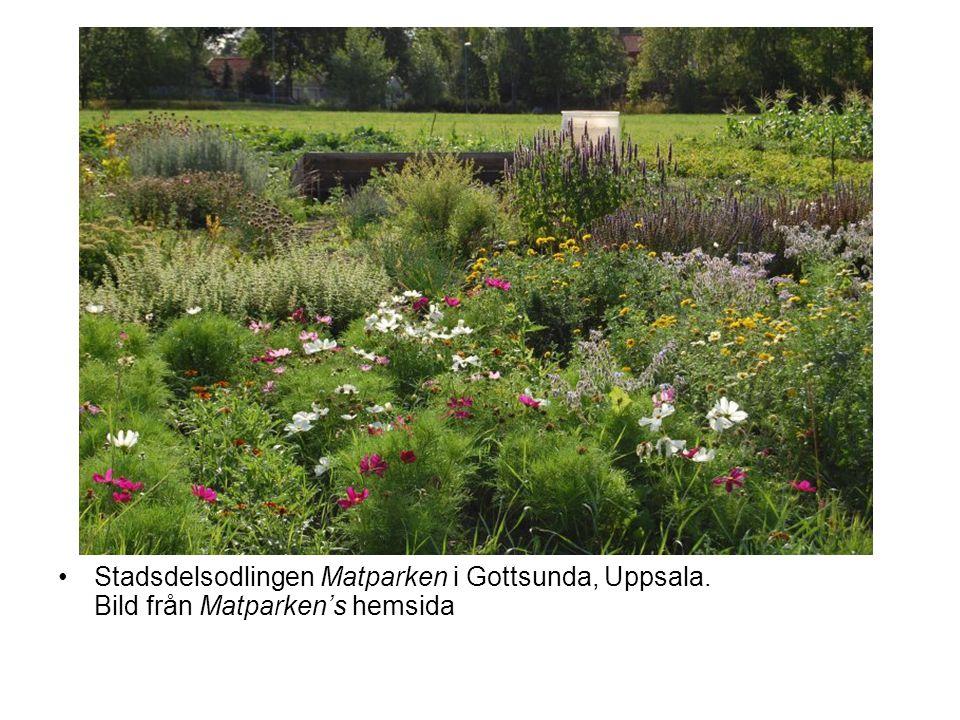 Stadsdelsodlingen Matparken i Gottsunda, Uppsala