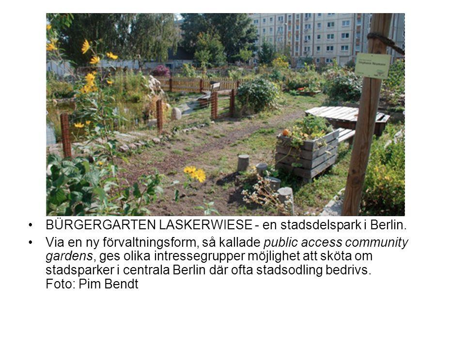BÜRGERGARTEN LASKERWIESE - en stadsdelspark i Berlin.