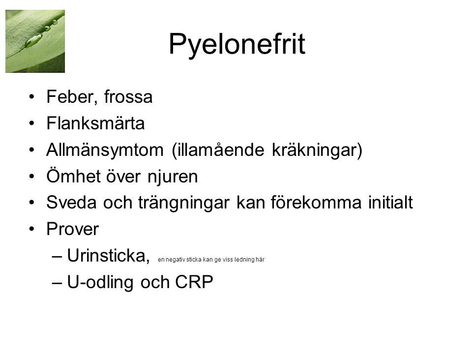 Pyelonefrit Feber, frossa Flanksmärta
