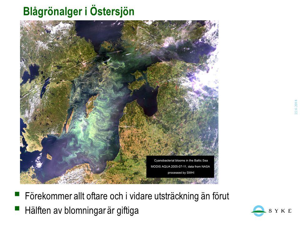 Blågrönalger i Östersjön