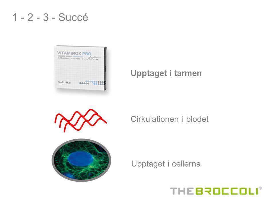 1 - 2 - 3 - Succé Upptaget i tarmen Cirkulationen i blodet