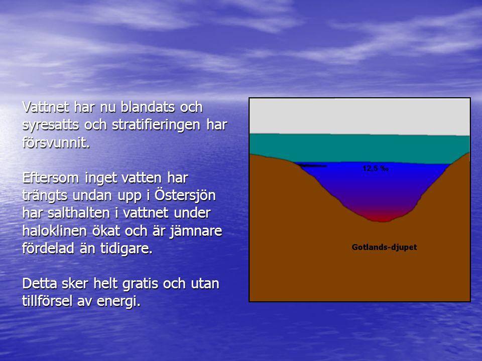 Vattnet har nu blandats och syresatts och stratifieringen har försvunnit.