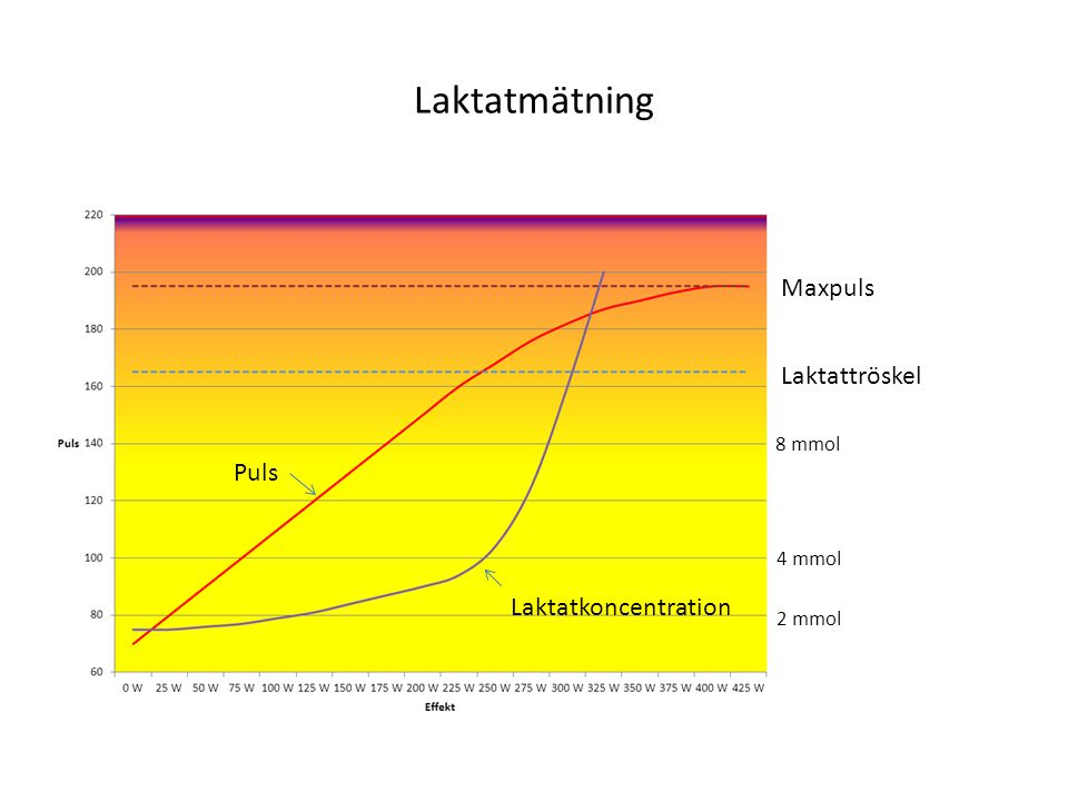 Laktatmätning Maxpuls Laktattröskel Puls Laktatkoncentration 8 mmol