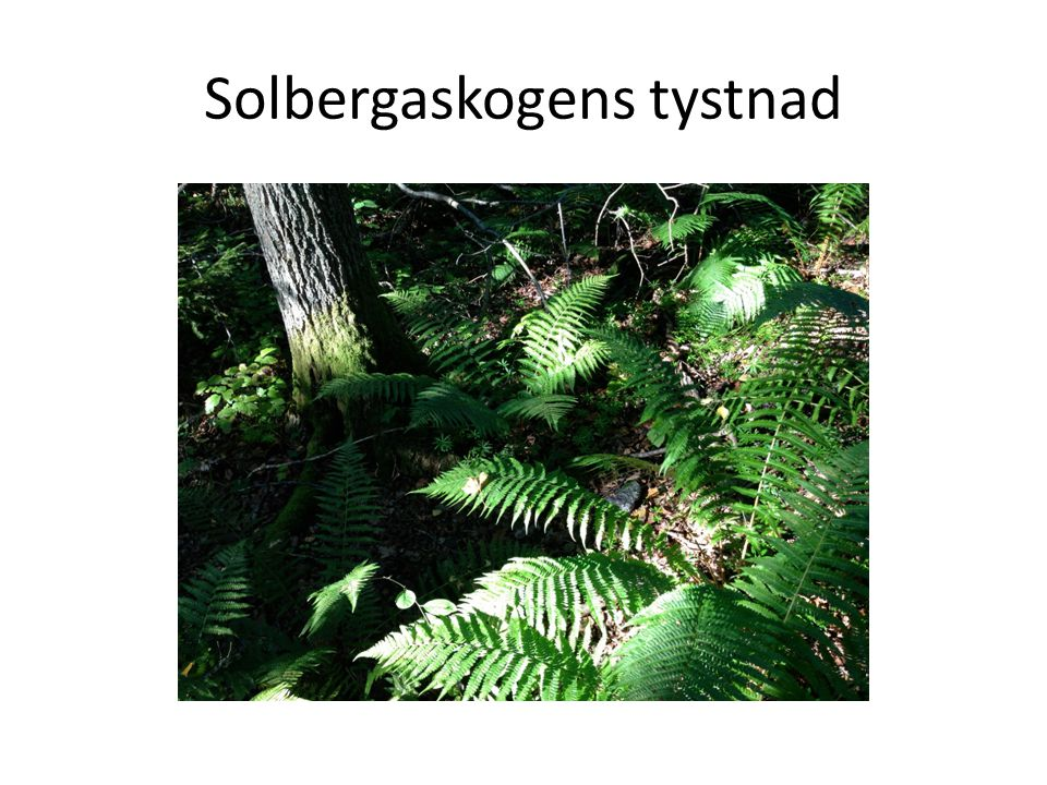 Solbergaskogens tystnad