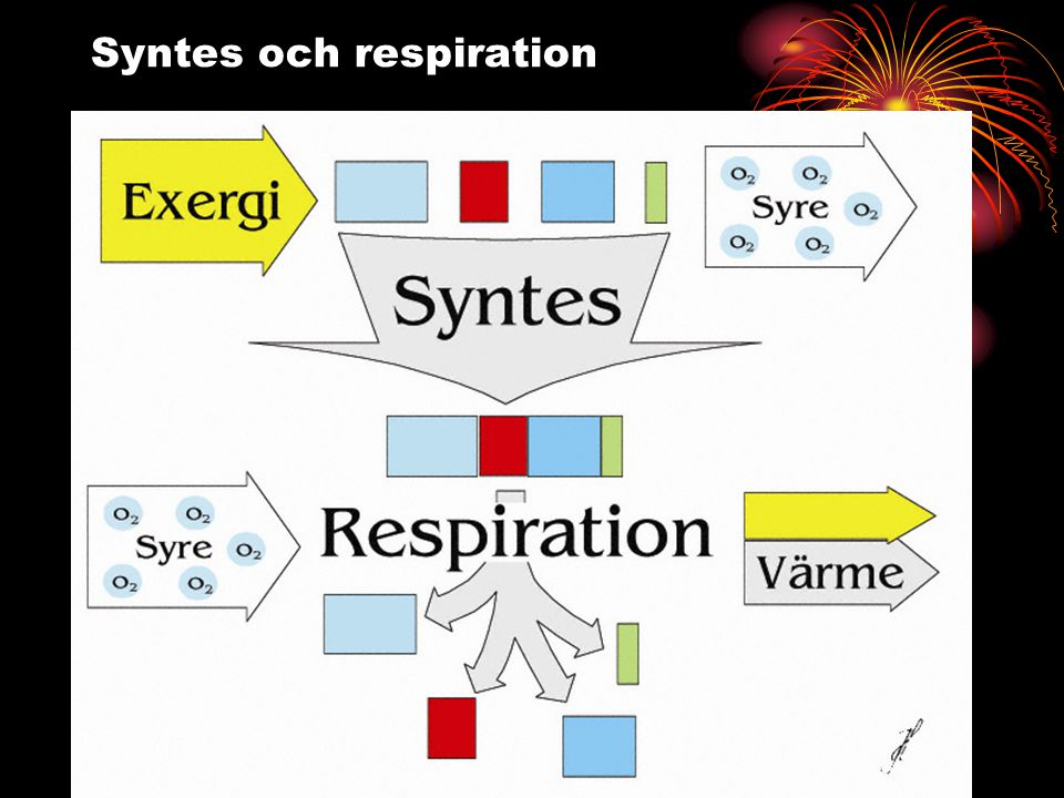 Syntes och respiration