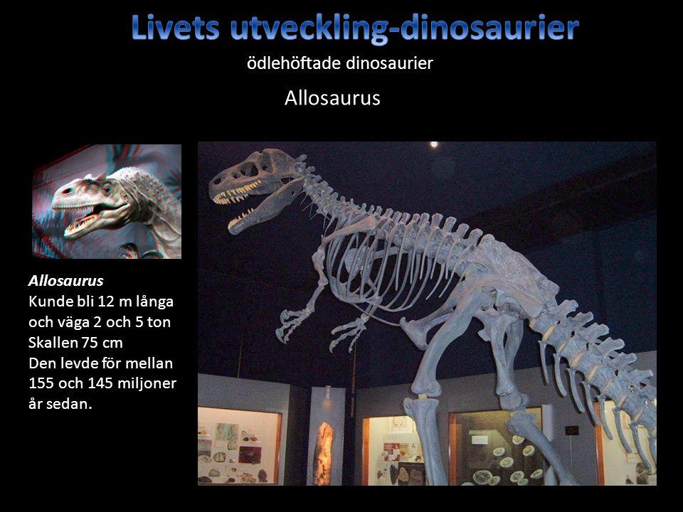Livets utveckling-dinosaurier