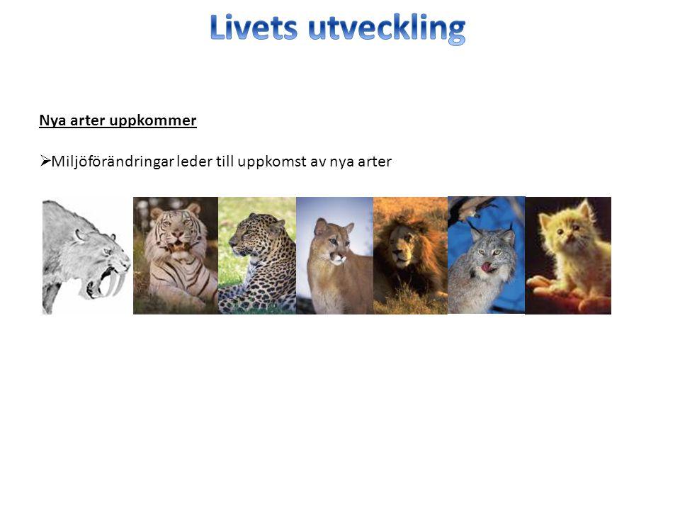 Livets utveckling Nya arter uppkommer