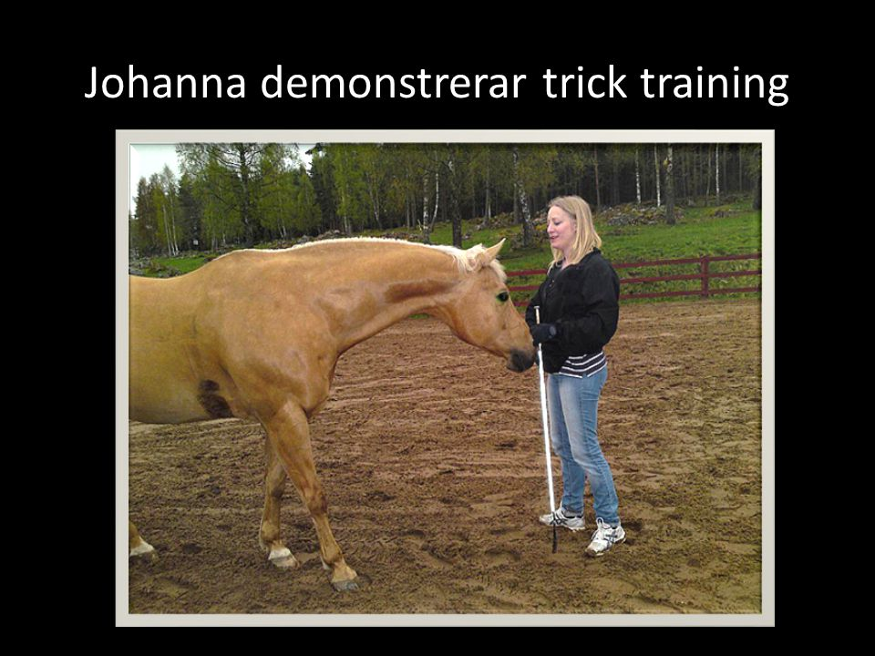 Johanna demonstrerar trick training
