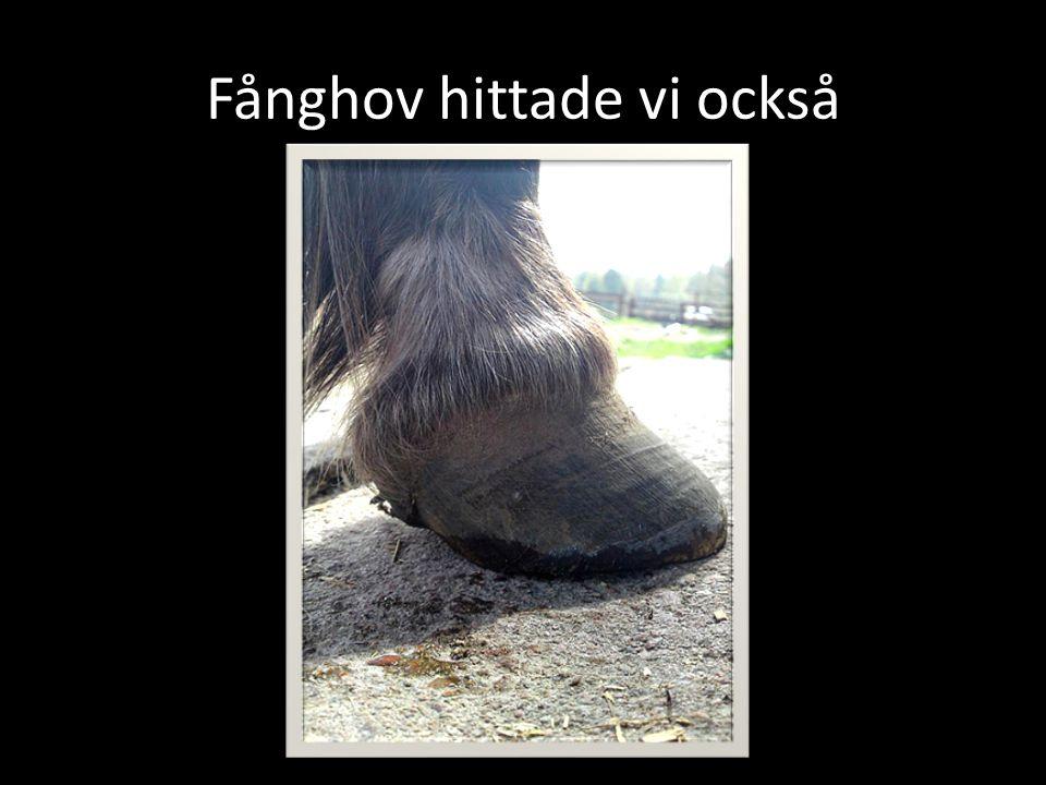 Fånghov hittade vi också