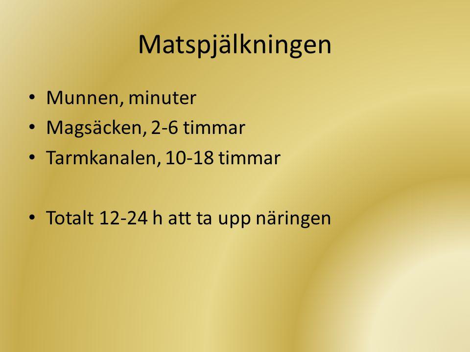 Matspjälkningen Munnen, minuter Magsäcken, 2-6 timmar
