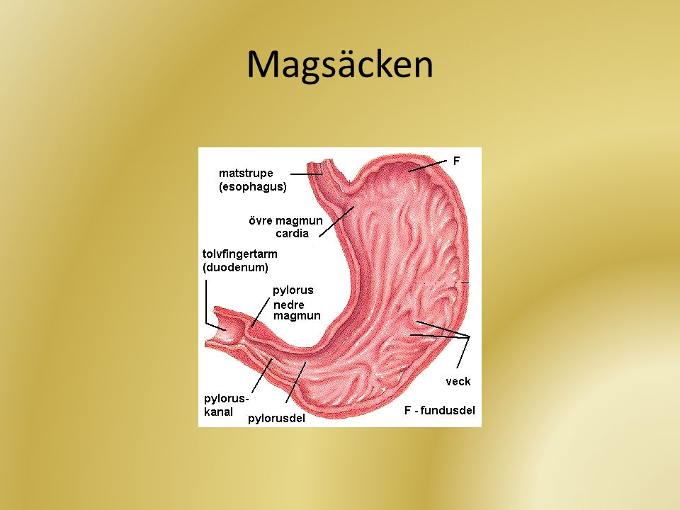 Magsäcken