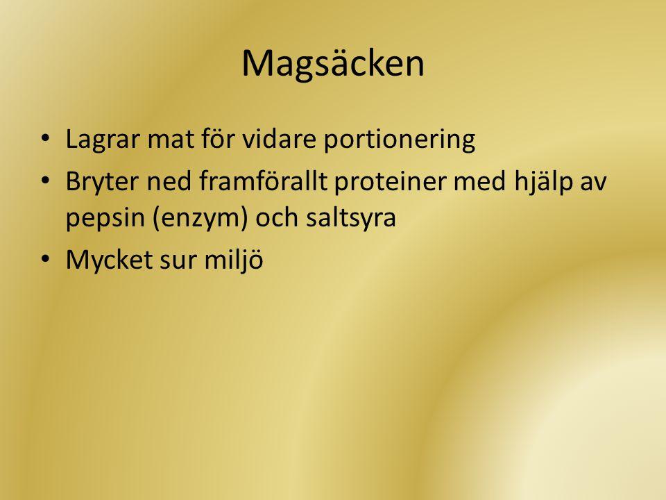 Magsäcken Lagrar mat för vidare portionering
