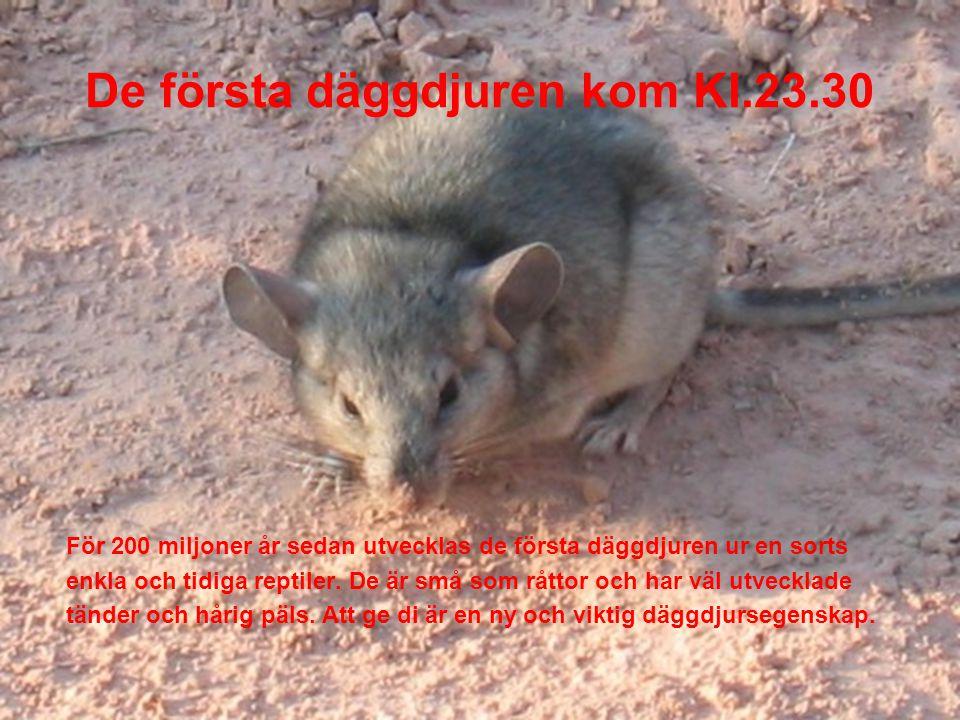 De första däggdjuren kom Kl.23.30