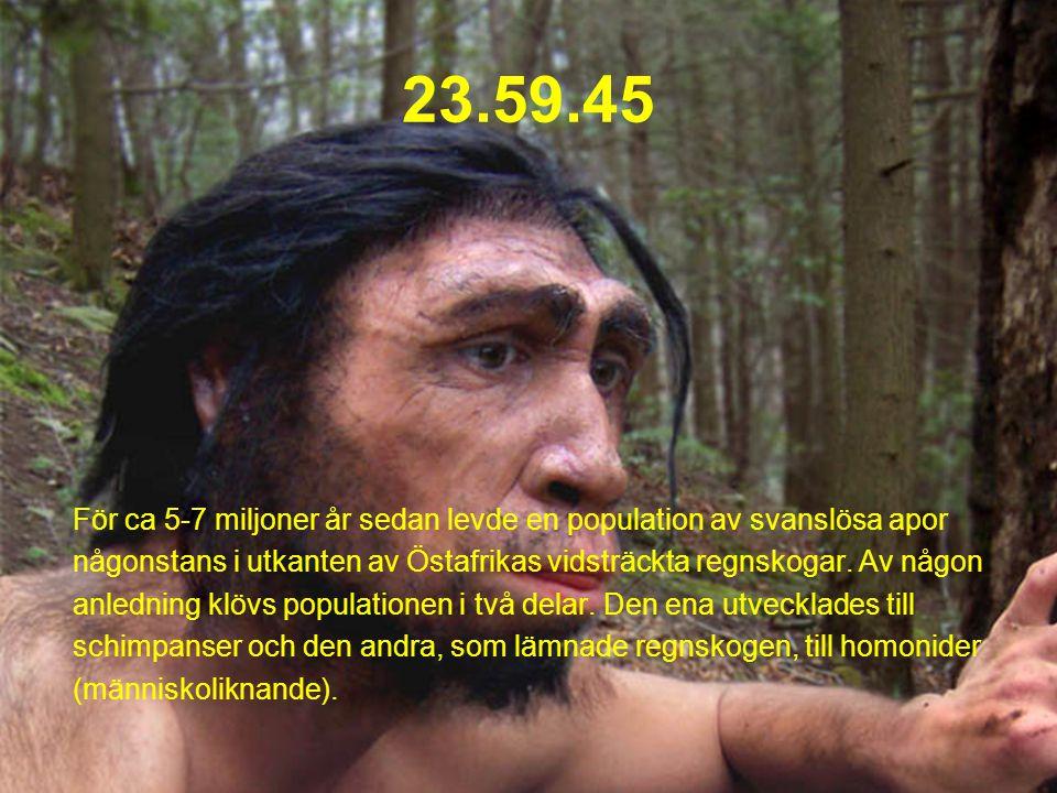 23.59.45 För ca 5-7 miljoner år sedan levde en population av svanslösa apor. någonstans i utkanten av Östafrikas vidsträckta regnskogar. Av någon.