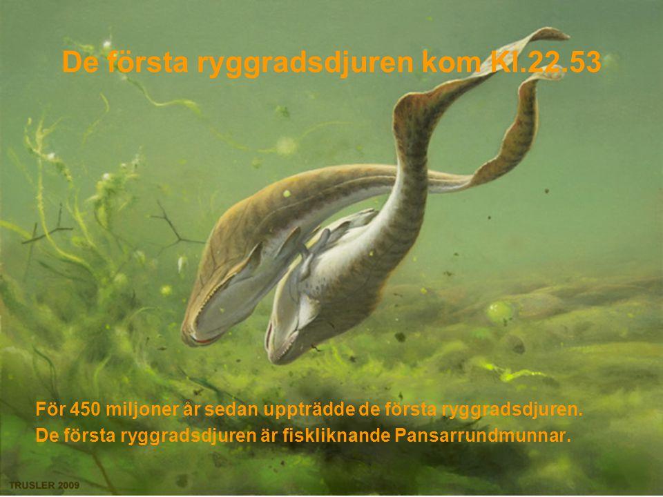 De första ryggradsdjuren kom Kl.22.53
