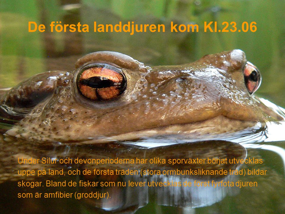 De första landdjuren kom Kl.23.06