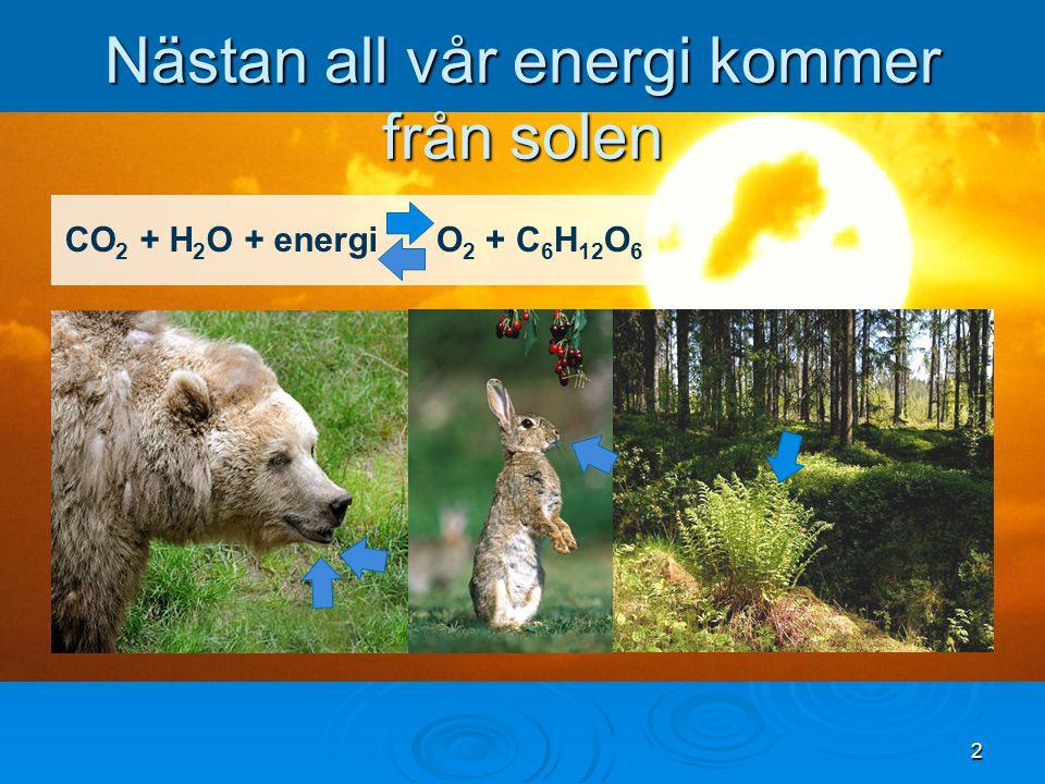 Nästan all vår energi kommer från solen