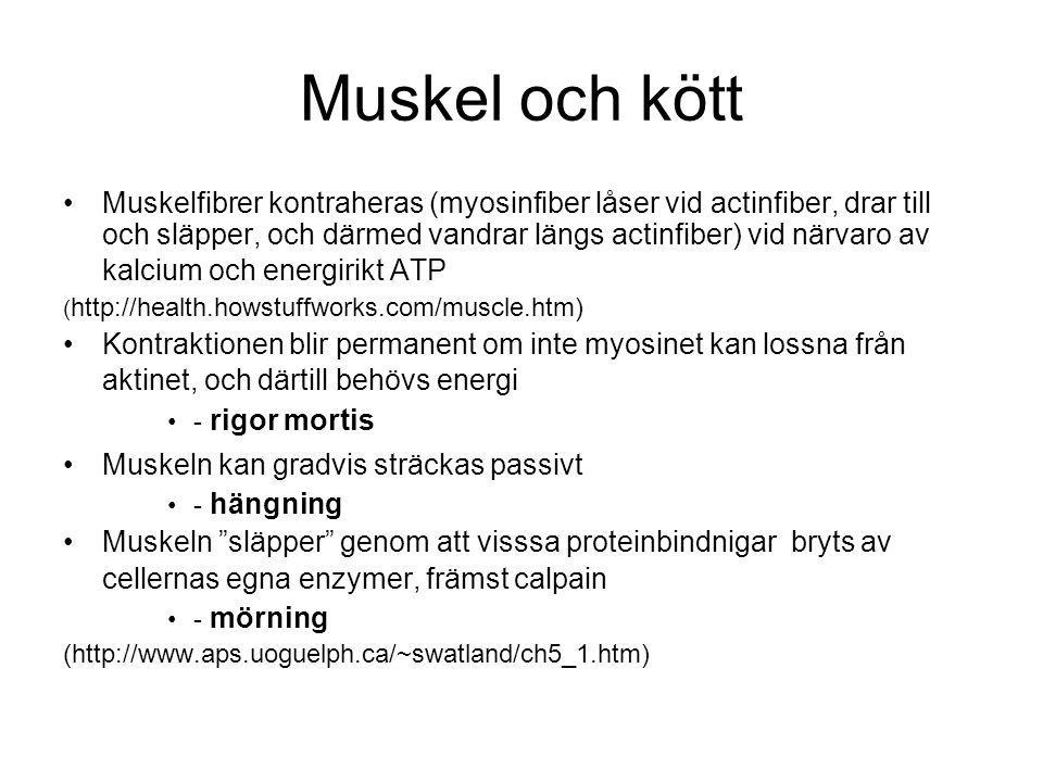 Muskel och kött