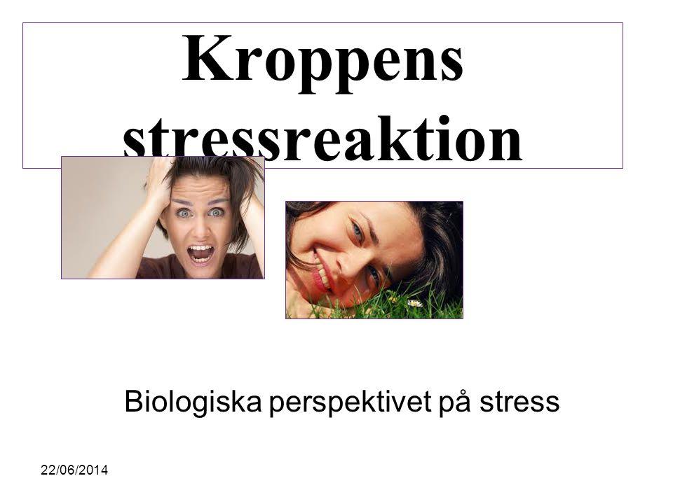 Kroppens stressreaktion