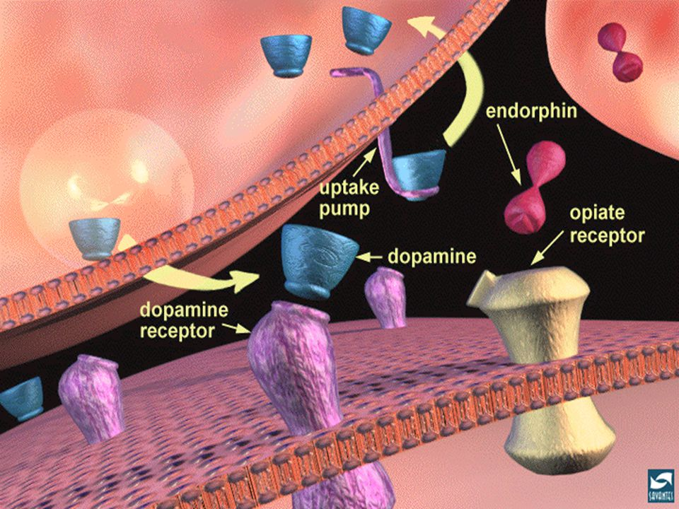 Neurotransmission 15