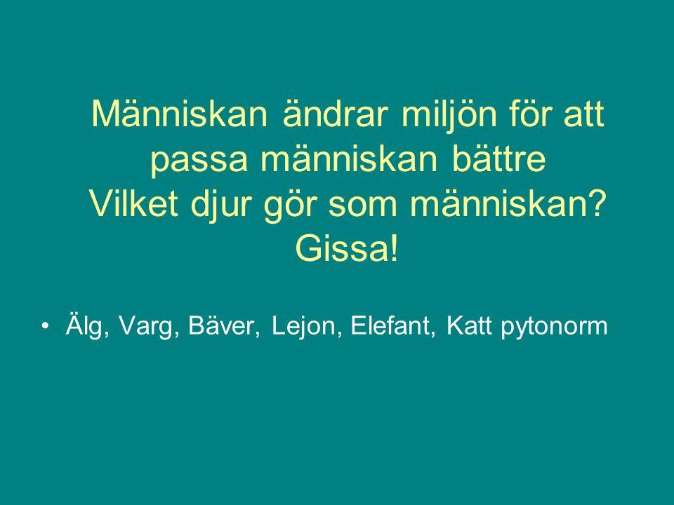 Människan ändrar miljön för att passa människan bättre Vilket djur gör som människan Gissa!