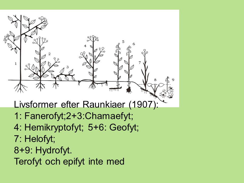 Livsformer efter Raunkiaer (1907):