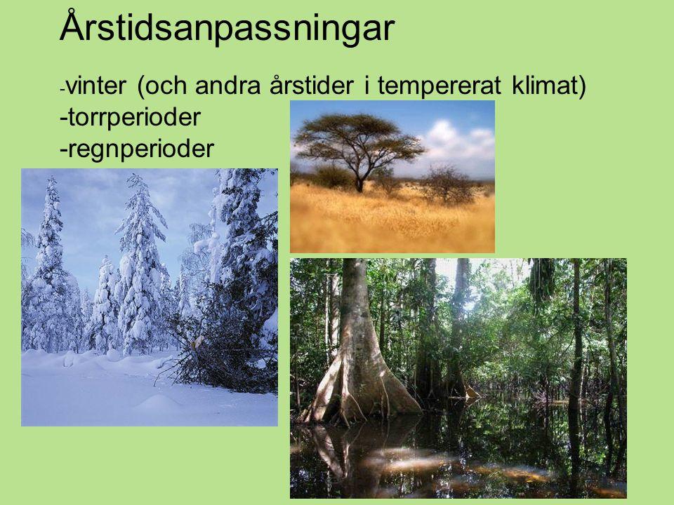 Årstidsanpassningar -torrperioder -regnperioder