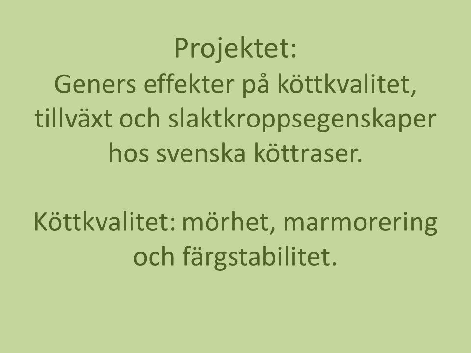 Projektet: Geners effekter på köttkvalitet, tillväxt och slaktkroppsegenskaper hos svenska köttraser.