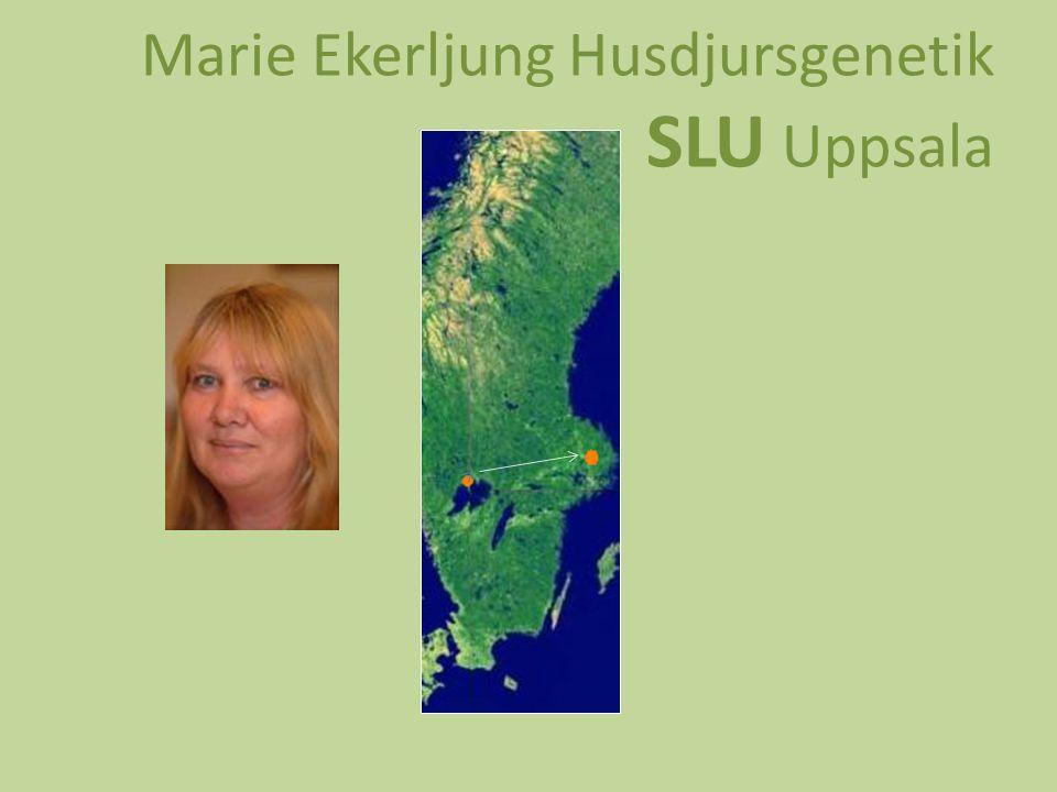 Marie Ekerljung Husdjursgenetik SLU Uppsala