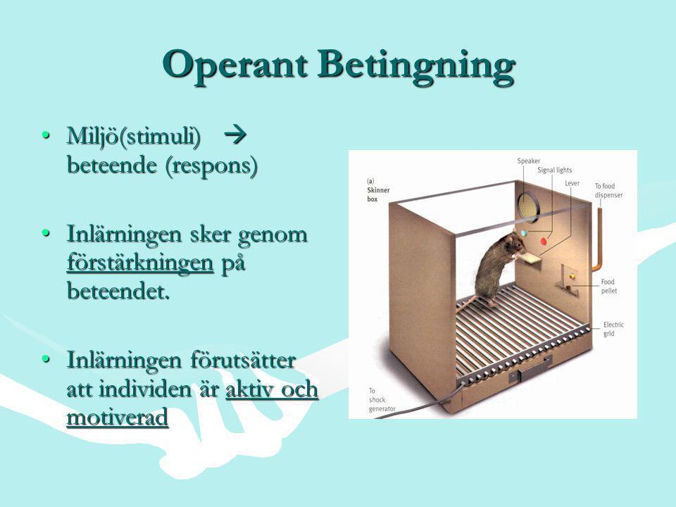 Operant Betingning Miljö(stimuli)  beteende (respons)