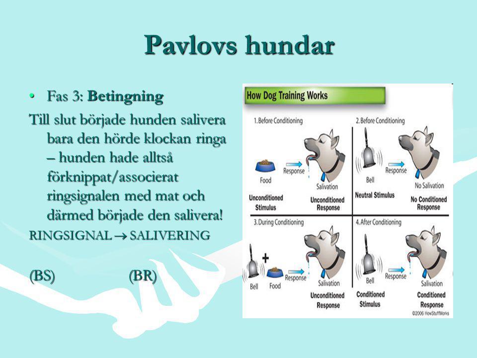 Pavlovs hundar Fas 3: Betingning
