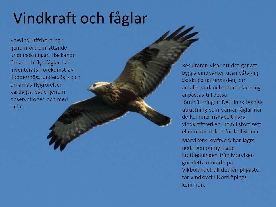 Vindkraft och fåglar