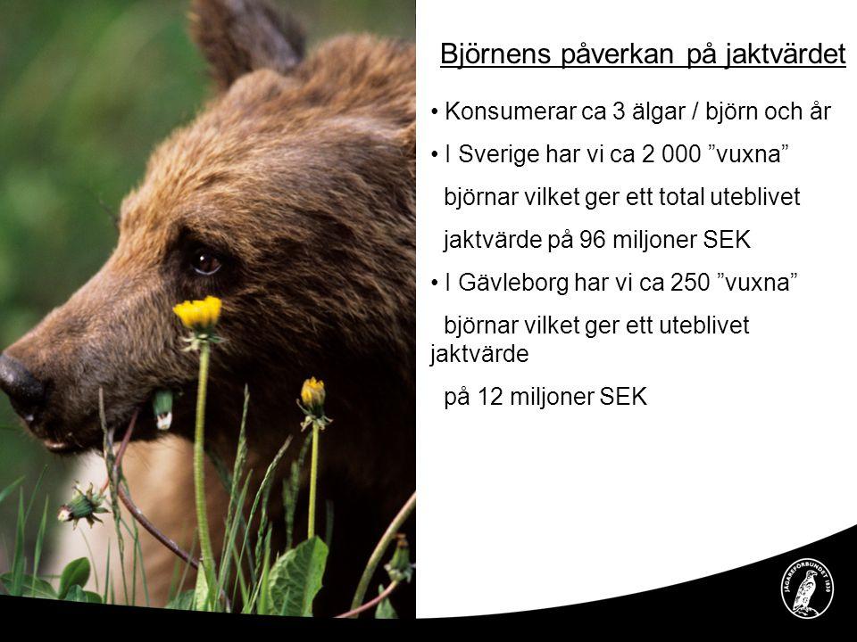 Björnens påverkan på jaktvärdet