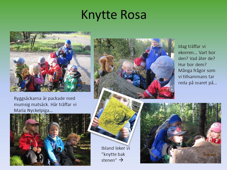 Knytte Rosa Idag träffar vi ekorren… Vart bor den Vad äter de Hur bor dem Många frågor som vi tillsammans tar reda på svaret på…
