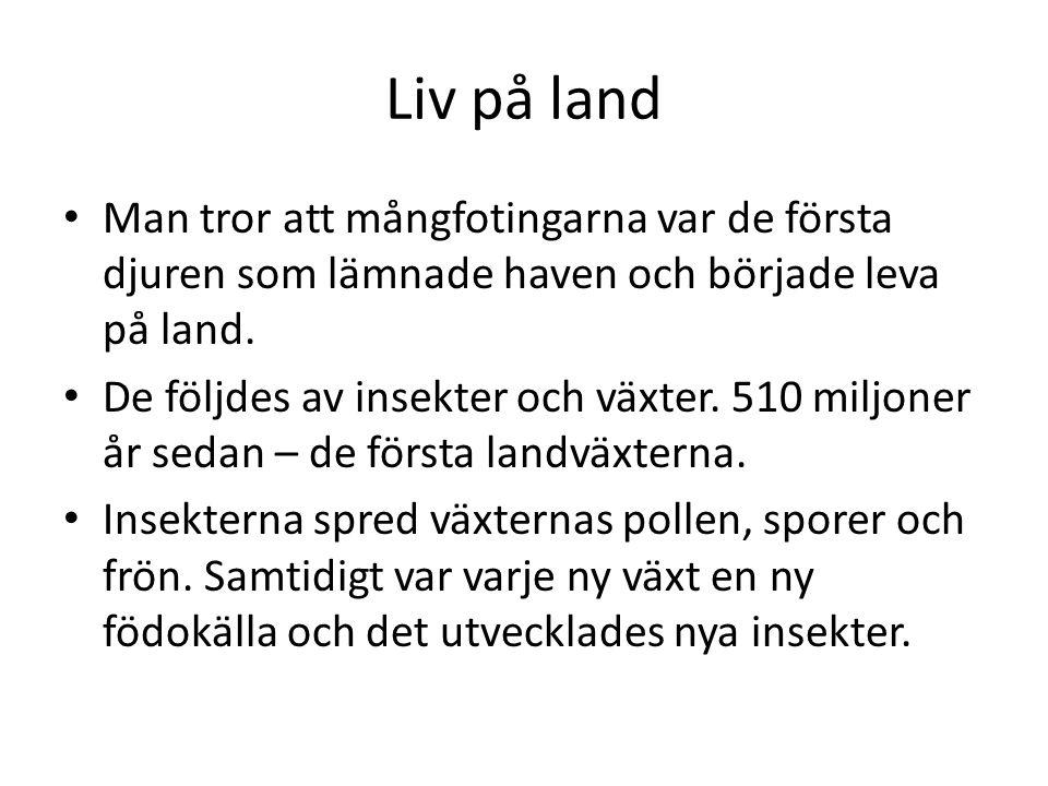 Liv på land Man tror att mångfotingarna var de första djuren som lämnade haven och började leva på land.