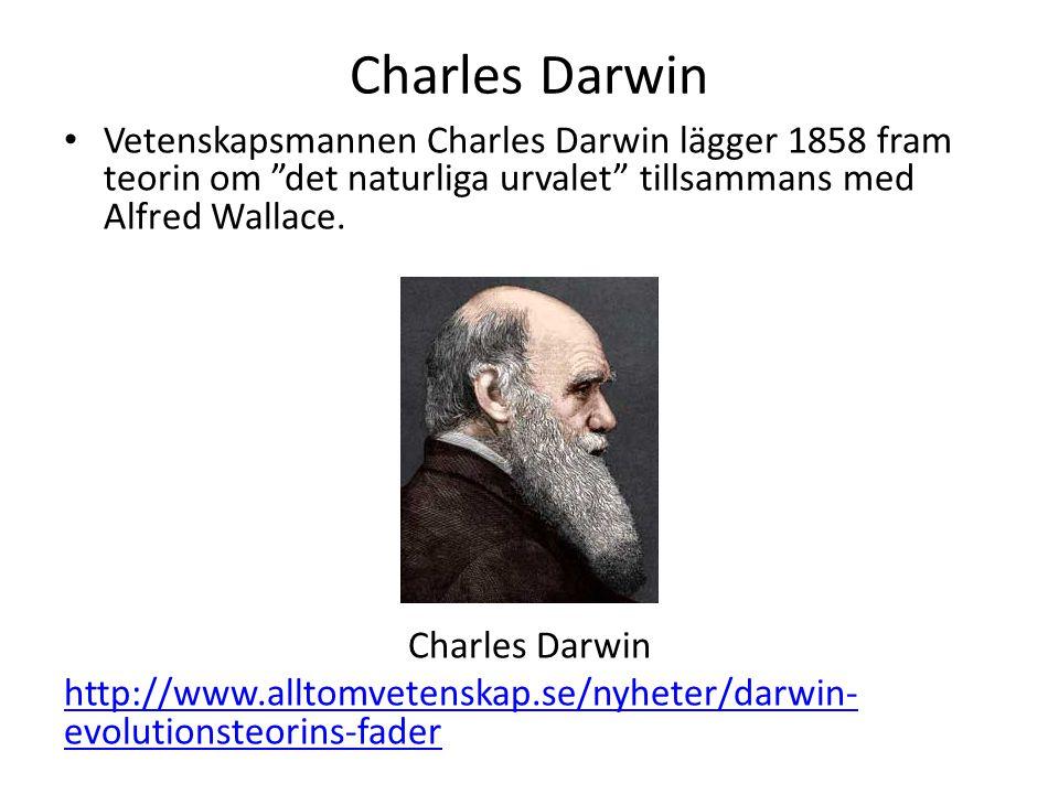 Charles Darwin Vetenskapsmannen Charles Darwin lägger 1858 fram teorin om det naturliga urvalet tillsammans med Alfred Wallace.