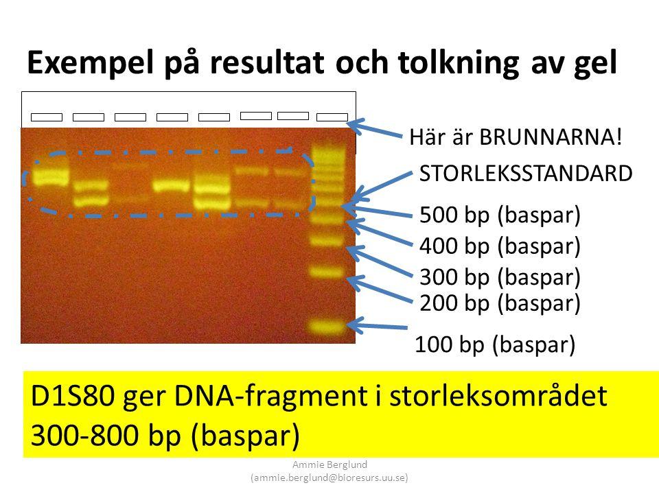 Exempel på resultat och tolkning av gel