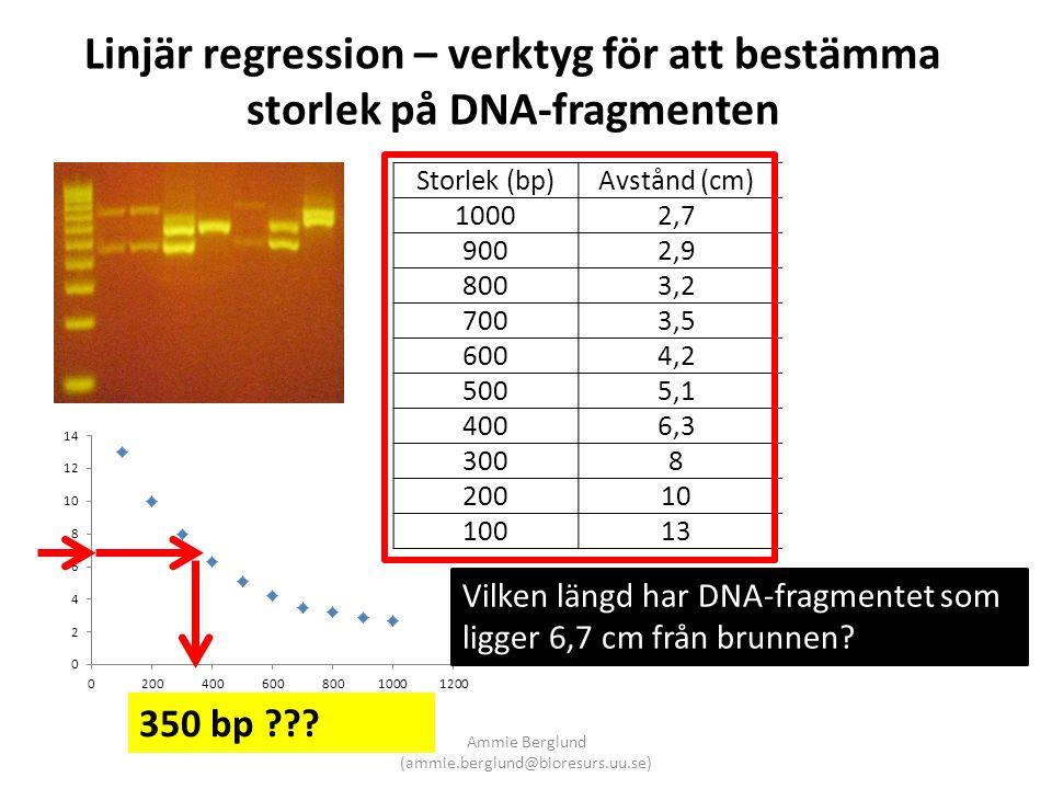 Linjär regression – verktyg för att bestämma storlek på DNA-fragmenten