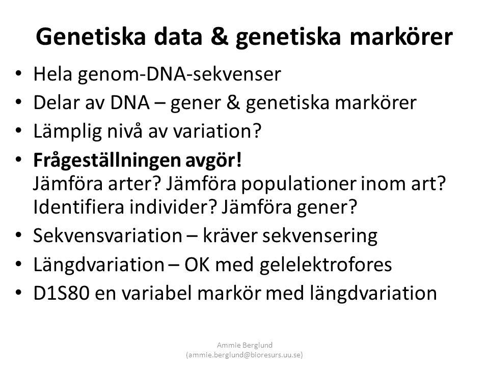 Genetiska data & genetiska markörer