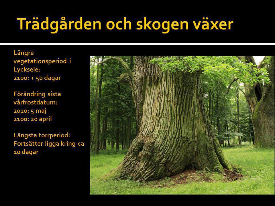 Trädgården och skogen växer